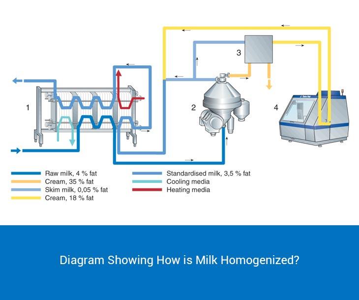 How is milk homogenized